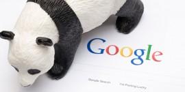 google-panda-japan